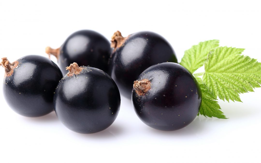 Black currant with leaf